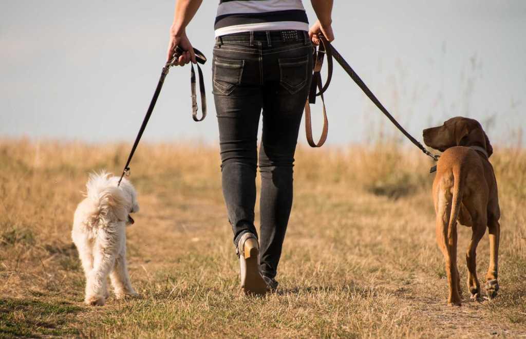 Dog Walking Southern highlands