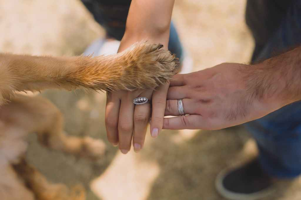 Wedding pet service