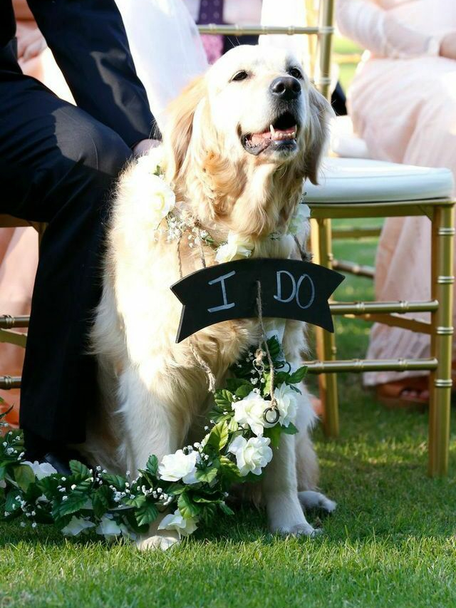 Wedding pet assistance