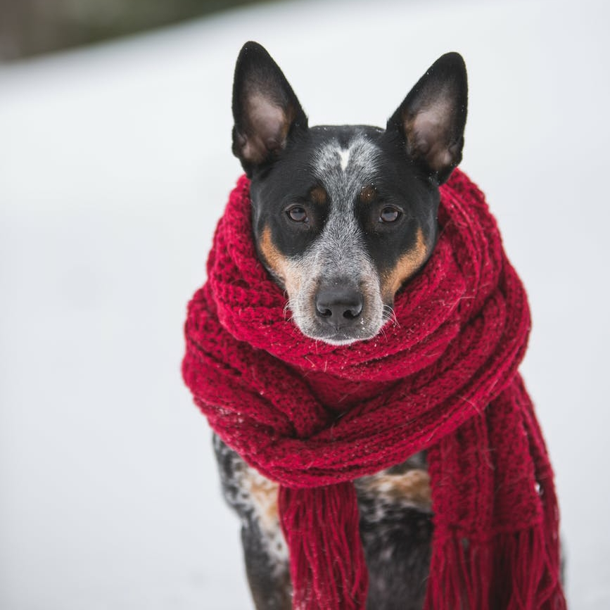 Dog during winter