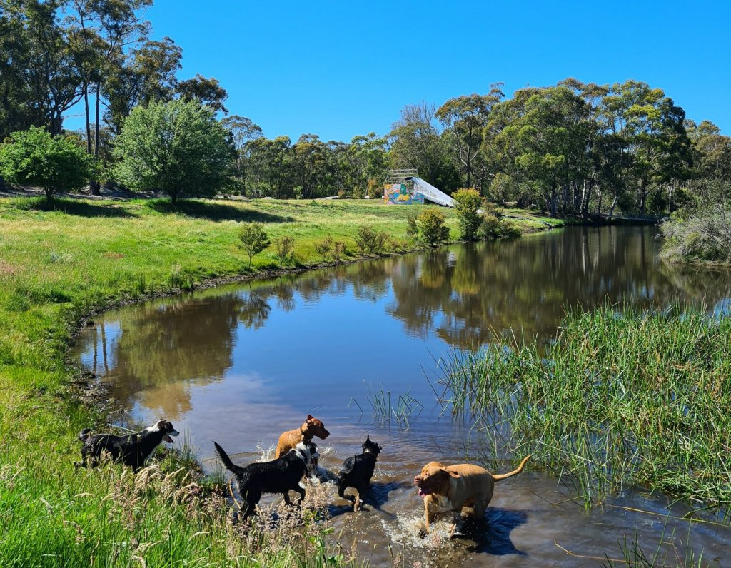 Dogs day out southern highlands