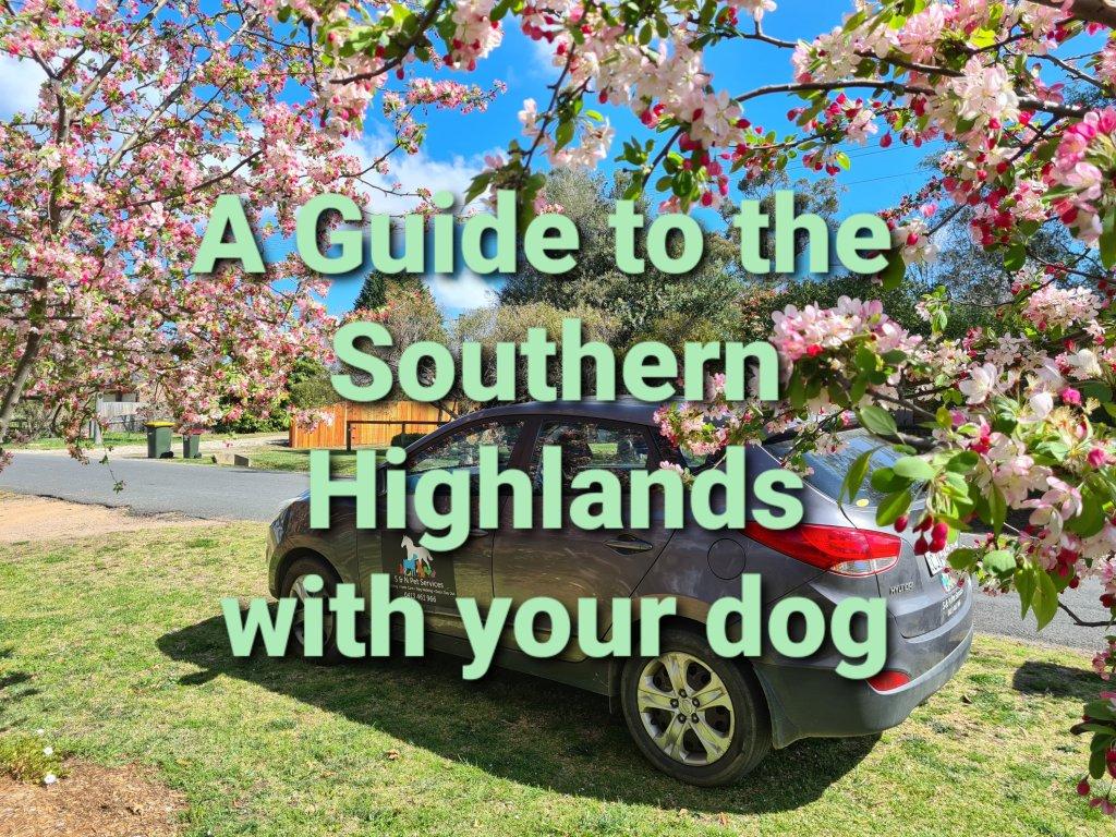 Southern highlands dog guide