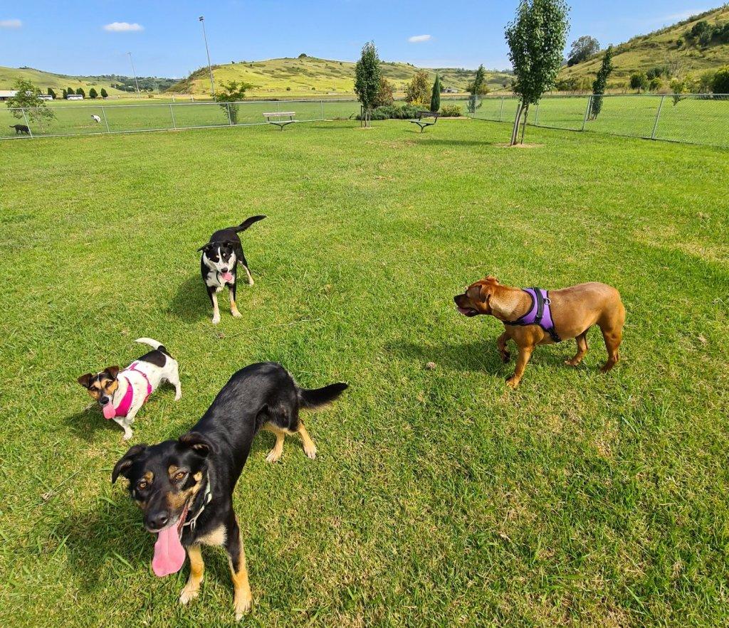 Dog park visits southern highlands