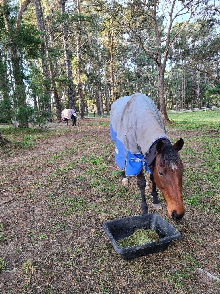 Equine care southern highlands
